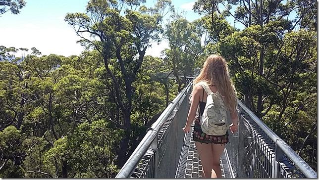 Australia Diaries: Tree Top Walk