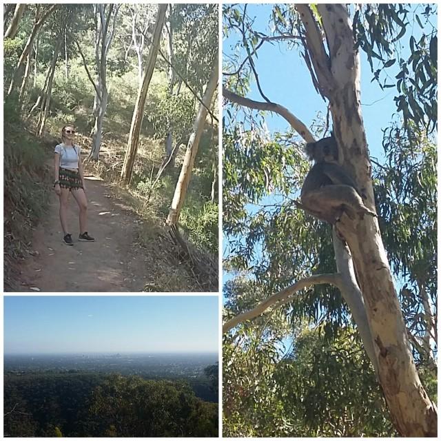 Australia Diaries: Morialta Conversation Park