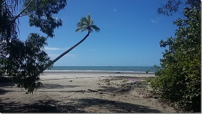 Living in the Daintree, North Queensland (13)